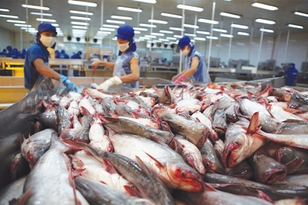 Pangasius exports to Russia decreased by 30.9%